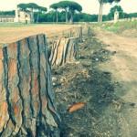 Il M5S interroga il Ministro Franceschini sull'abbattimento degli alberi nella Reggia di Carditello