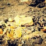 M5S: Ex Pozzi, analisi campioni confermano rifiuti tossici, ora giustizia e bonifica per Calvi Risorta