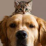 M5S: Costo del farmaco veterinario Soliphen spropositato, interrogazione al Senato