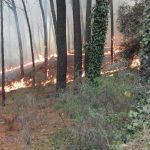Incendi Sicilia, Moronese(M5S) : Crocetta non conosce le norme, piano antincendi fermo al 2015