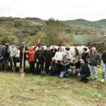 Alberi per il Futuro, piantati 50 lecci a Caiazzo(Caserta)