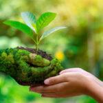 Decreto Semplificazioni, parere favorevole dalla Commissione Ambiente al Senato, accolte dal M5S le proposte delle associazioni.